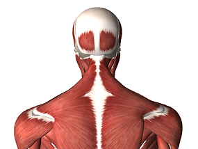 Neck Extesion.PNG