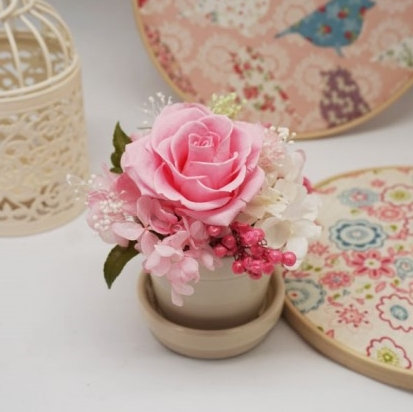 원형장미 핑크