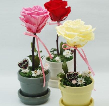 장미 토피어리(3 color)