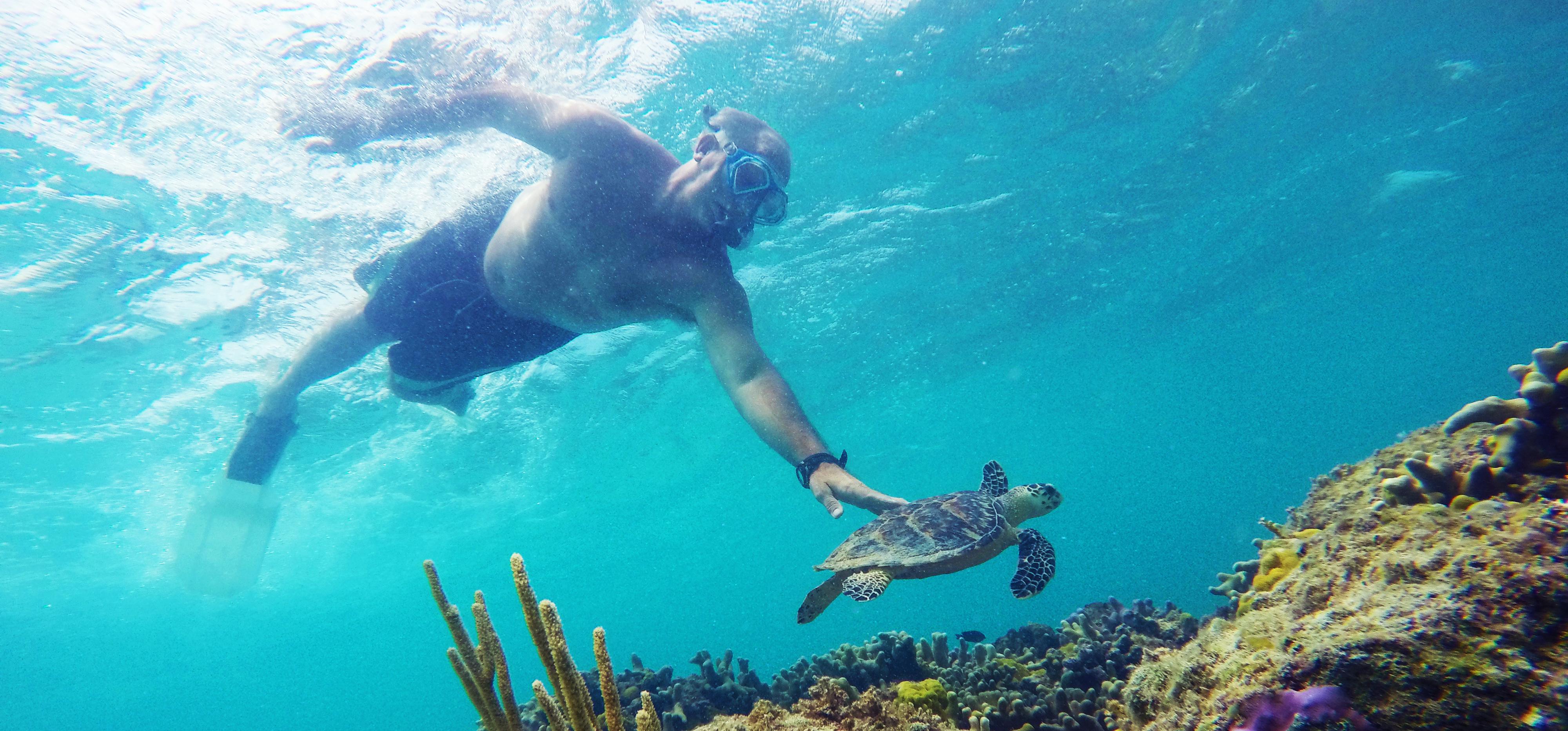 Turtle Snorkel Exuma Bahamas