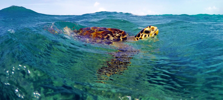 Turtle in Exuma Bahamas