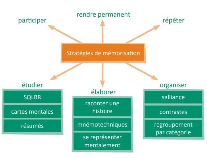 mémorisation-neurosciences