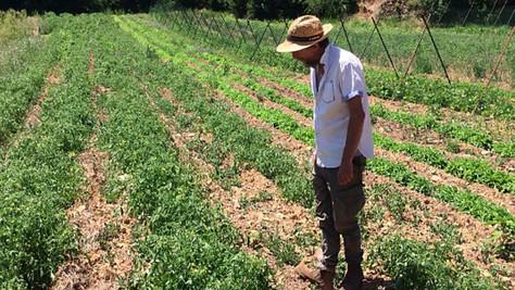 Il utilise les principes de la Parentalité Positive pour cultiver ses légumes