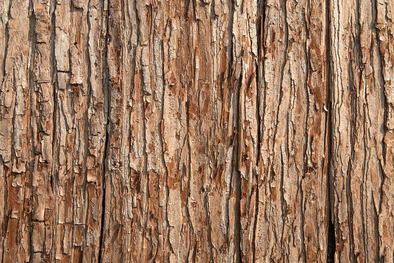 tree-texture.jpg