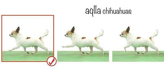 movimento cihuahua