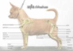 arti chihuahua
