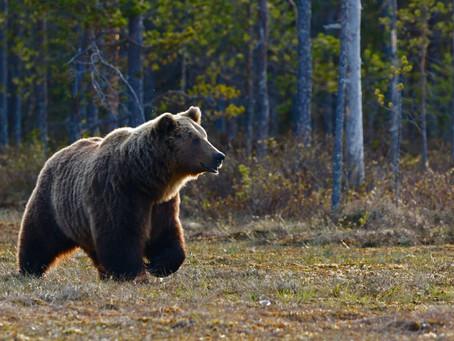 Cuidado con el oso del mercado