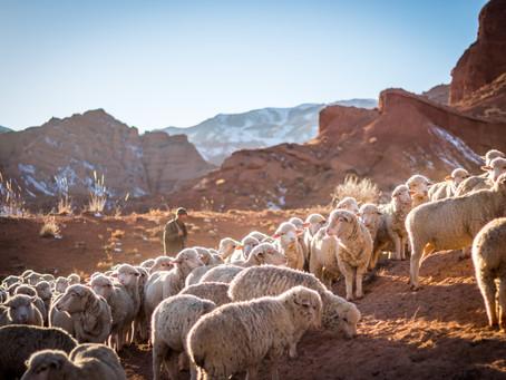 My Sheep Listen to My Voice