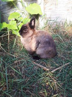 1st Place Rabbit- Cassie Moline