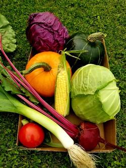 1st Place Collection of Vegetables - Anne DeJong