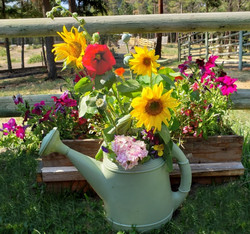 3rd Place Assortment of Garden Flowers - Anita Castle