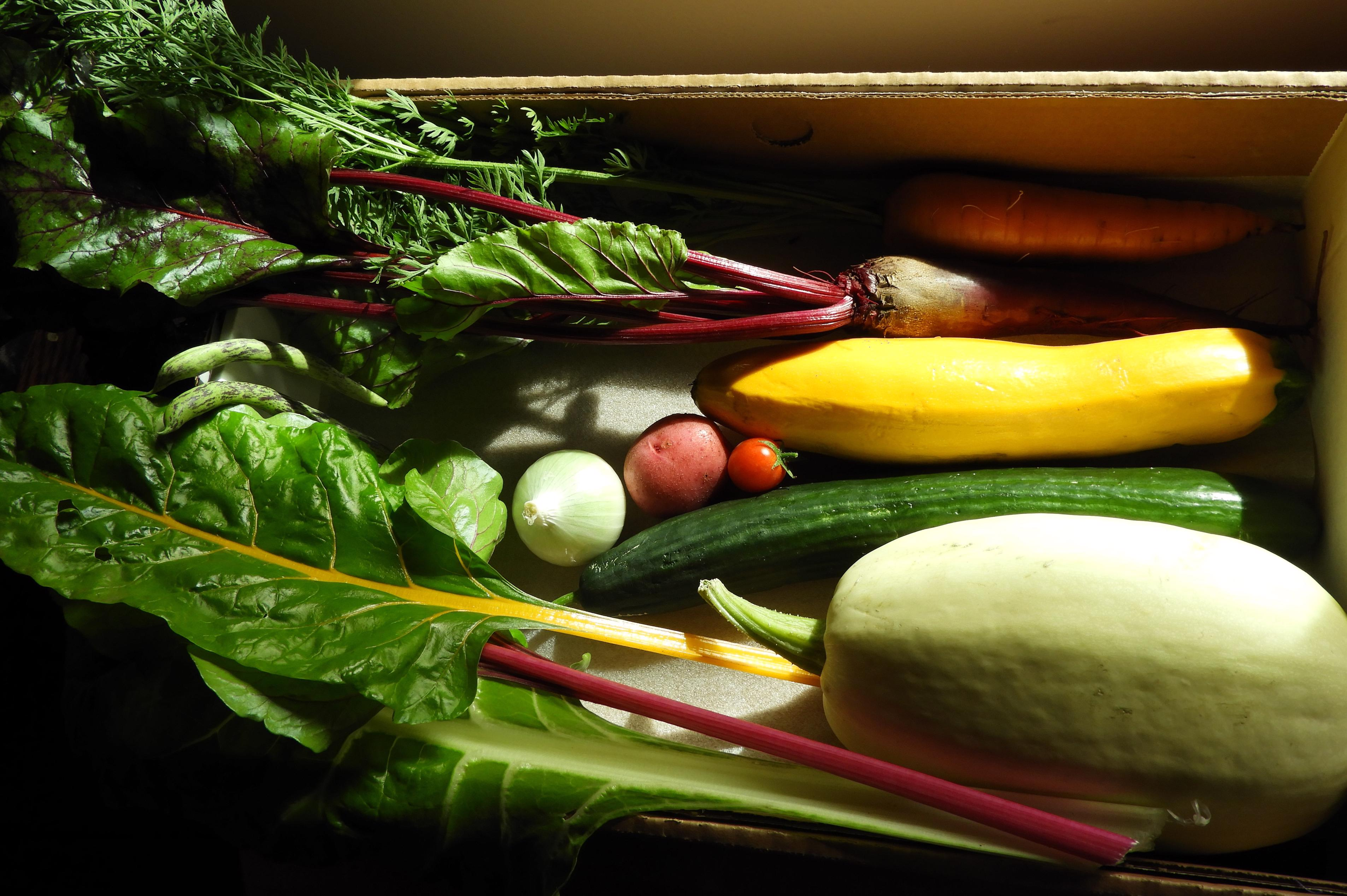 3rd Place Collection of Vegetables - Norma Howes