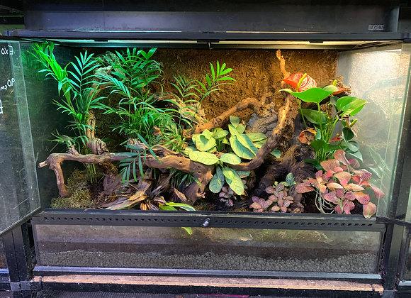 90cm x 45cm x 60cm - Fully Planted Terrarium