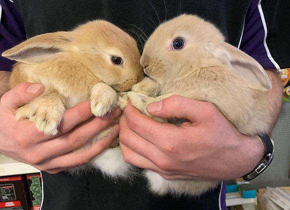 Rabbits (Various types and colours)