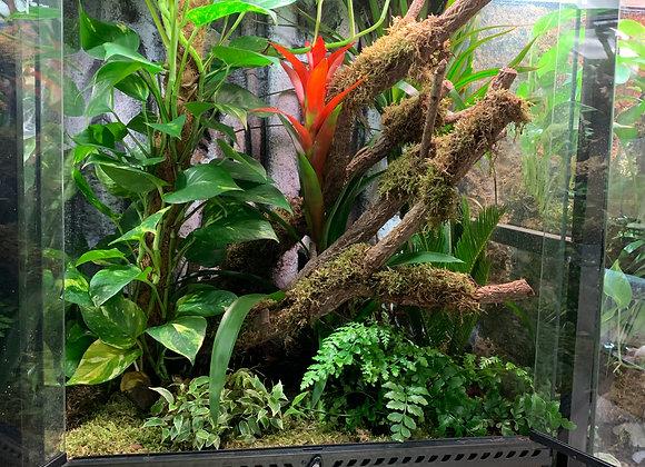 60cm x 45cm x 90cm - Fully Planted Terrarium