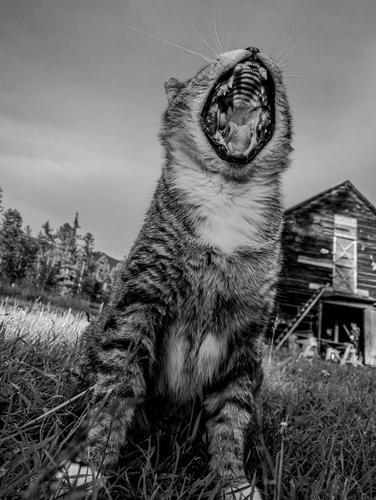 Peak Roar