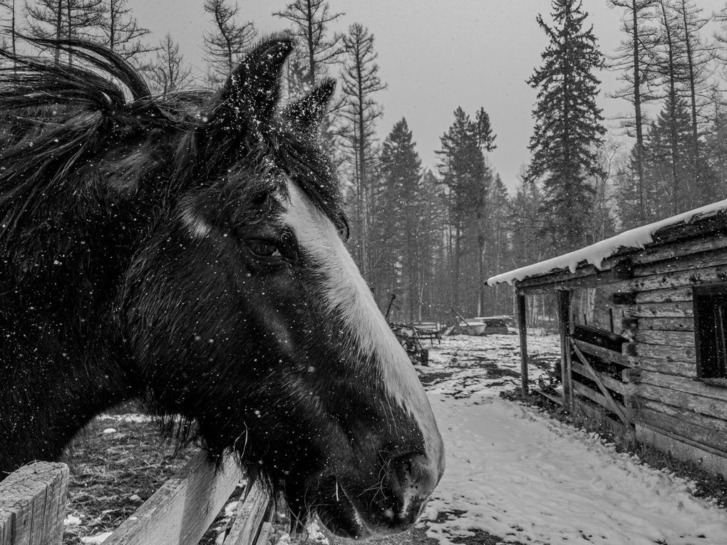 A Horse Named Sam