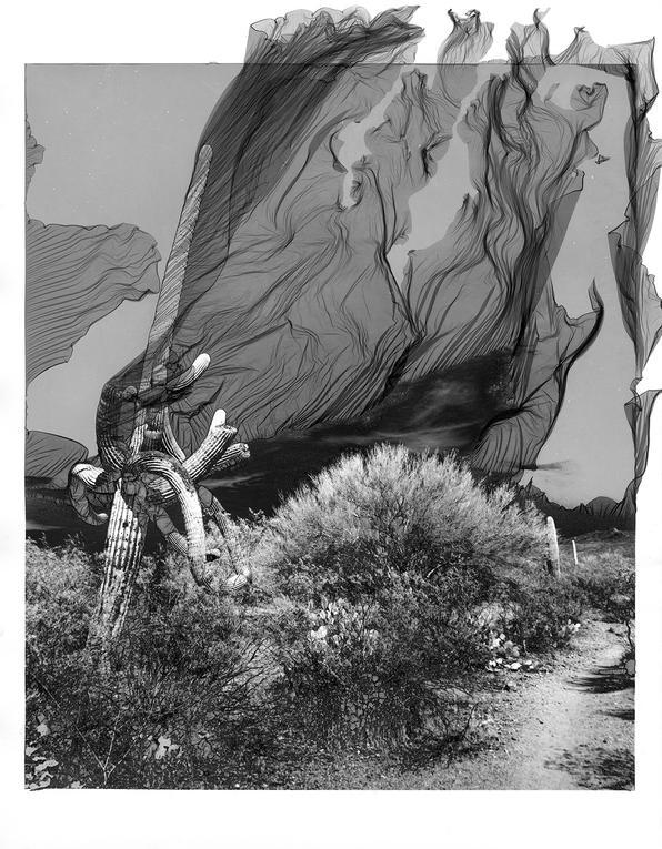 J. Jason Lazarus - Saguaro National Park, Tuscon, Arizona - Silver Gelatin print treated in the Mordançage process