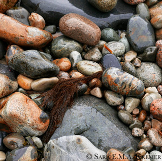 Stones and Seaweed