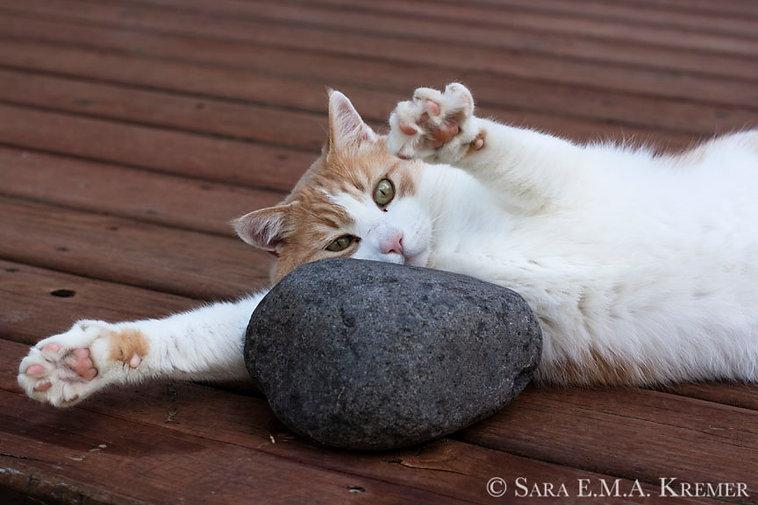 Rock_Hugger_72ppi_web.jpg