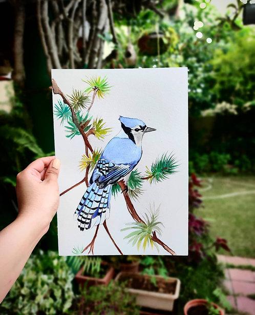 Blue Jay (Watercolor)