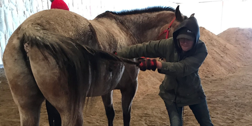 FREE Equine Osteopathy Demo