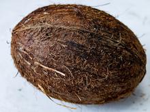 500px-Coconutonwhitebg.png