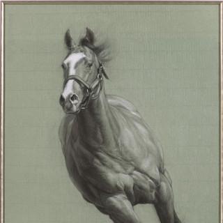Stallion Study