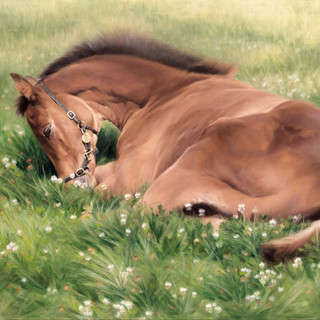Filly called Flo