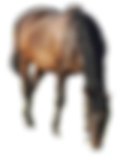 Poneys%2520en%2520vacances!_edited_edite