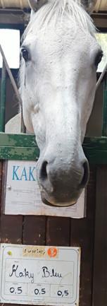 Kaki bleu