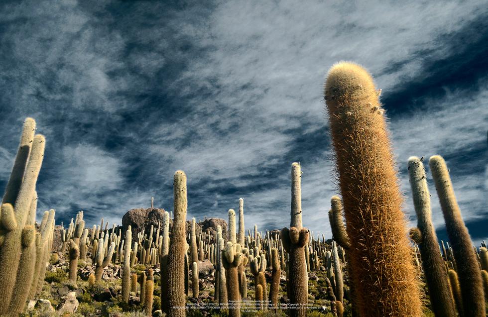Isla Incahuasi, Bolivia - 2012