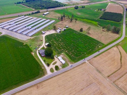 corn maze 4