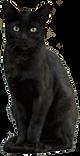 Katzensitter, Tiersitting, Home and Petcare