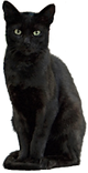 Katzensitter, Tiersitter, Home and Petcare