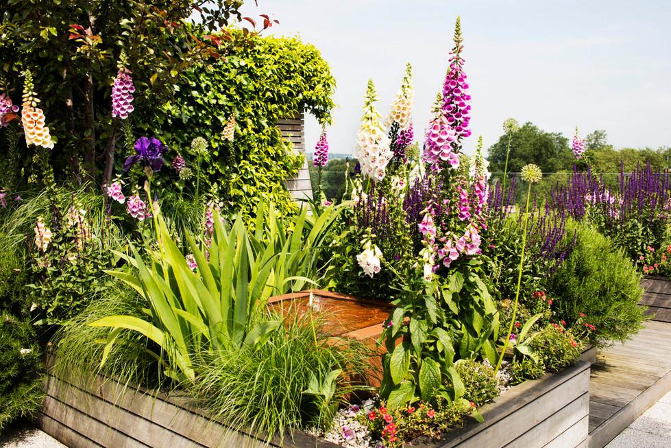 Allsop House garden June'16MH__4061.jpg