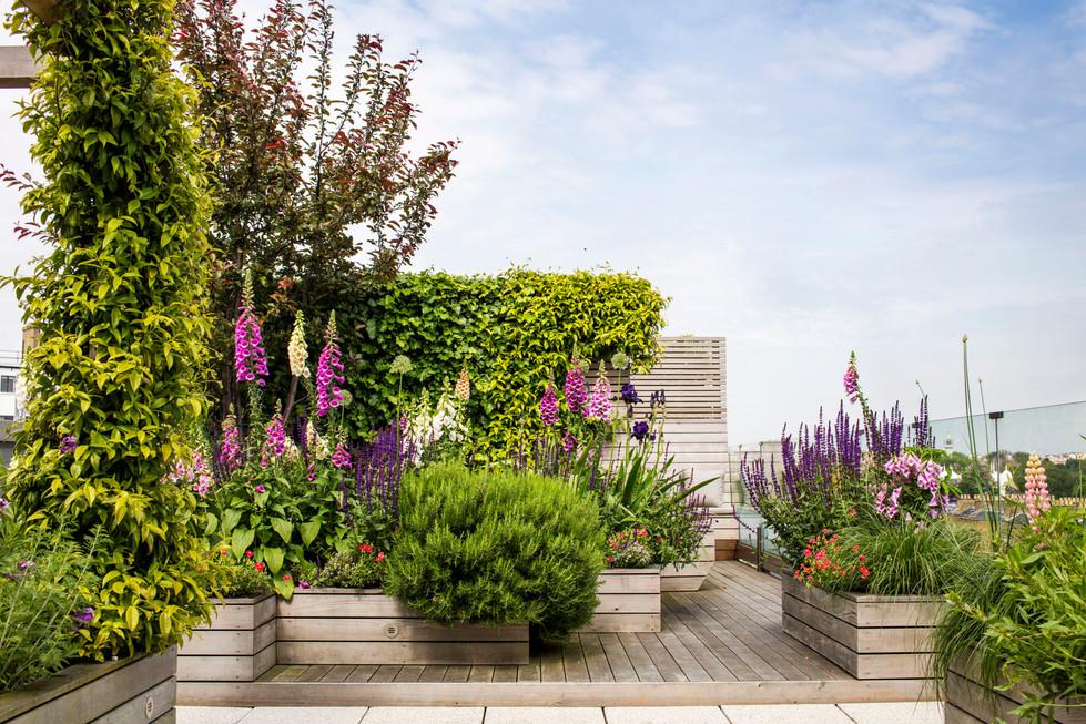 Allsop House garden June'16MH__3952.jpg