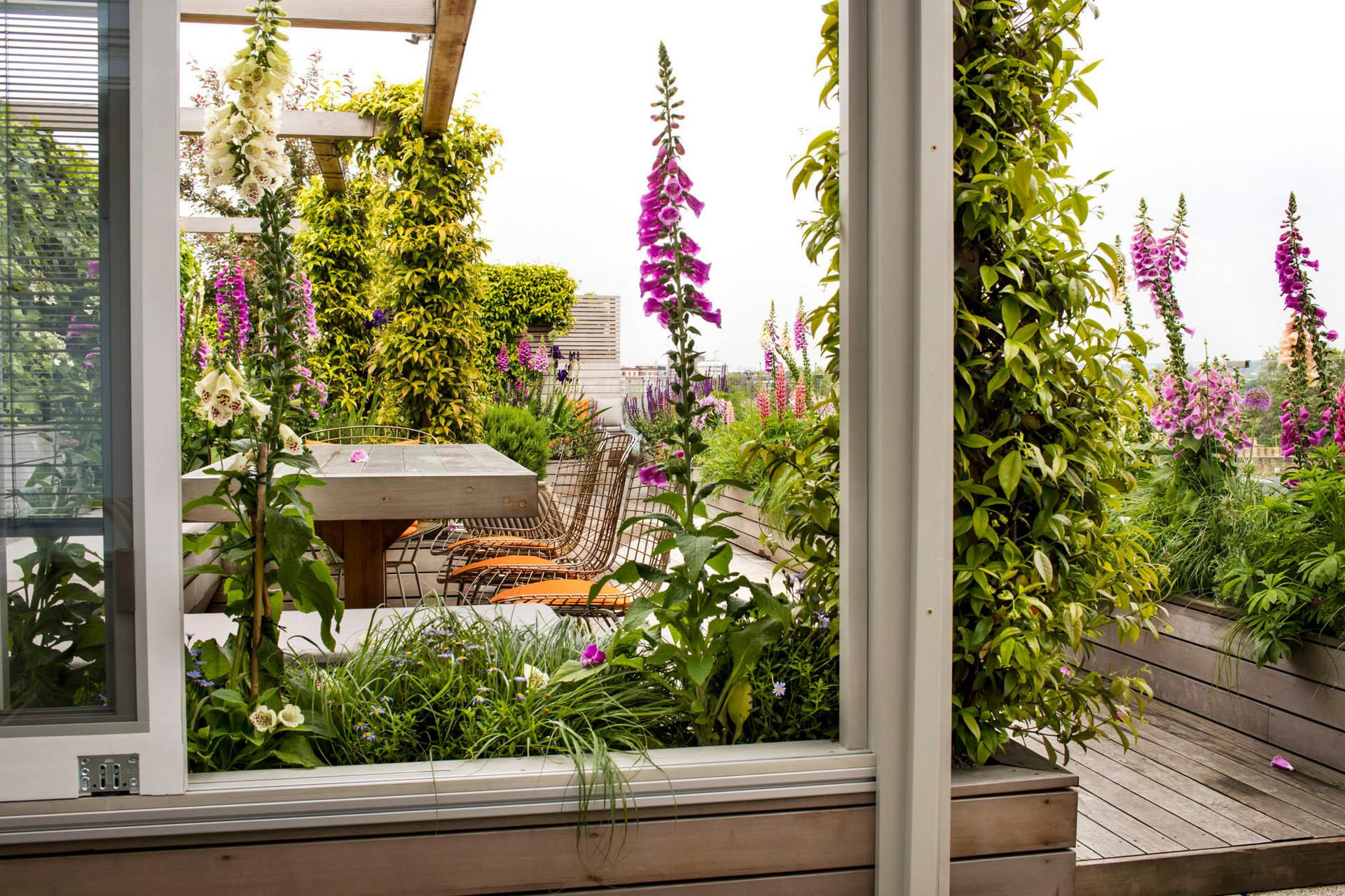 Allsop House garden June'16MH__3829.jpg