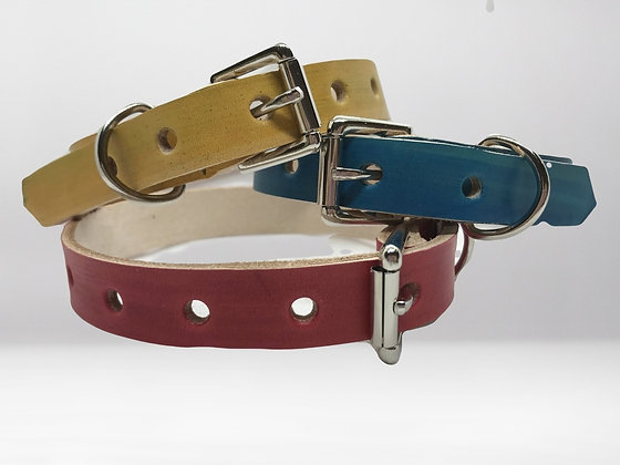 Colourful Collars