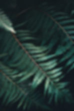 aaron-birch-IZZC4Y4jUJc-unsplash-min_edi