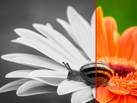 We Think Life Deserves Full Colour