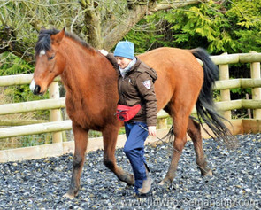 Inner Stillness: The Key to Attunement with Horses