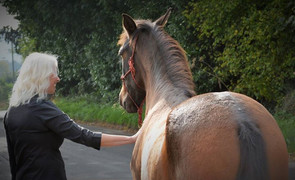 Emotional Wellbeing: The True Heart of Horsemanship