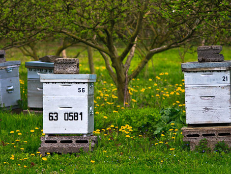 Particuliers, comment déclarer et assurer vos ruches?