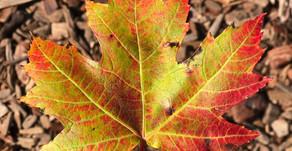 Take a leaf...