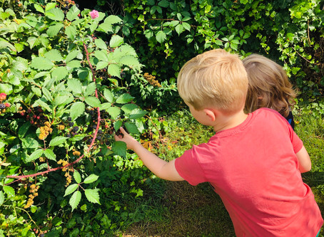 BLACKBERRY PICKING: 'This activity is sure to grab the attention of outdoor-loving children'