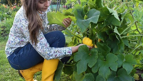 'Keeping an allotment necessitates a lot of fresh air and exercise'
