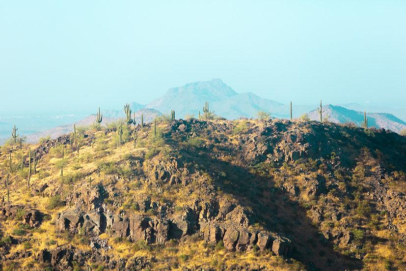 Arizona XX