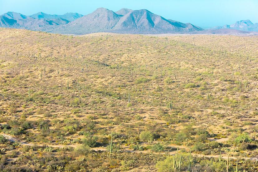Arizona XXIII