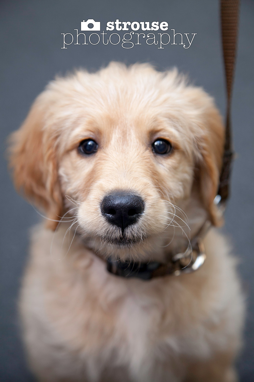 Dog Lover's Obedience School, Richmond, Virginia